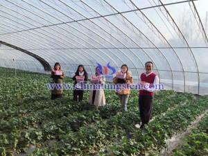 小山村草莓园图片
